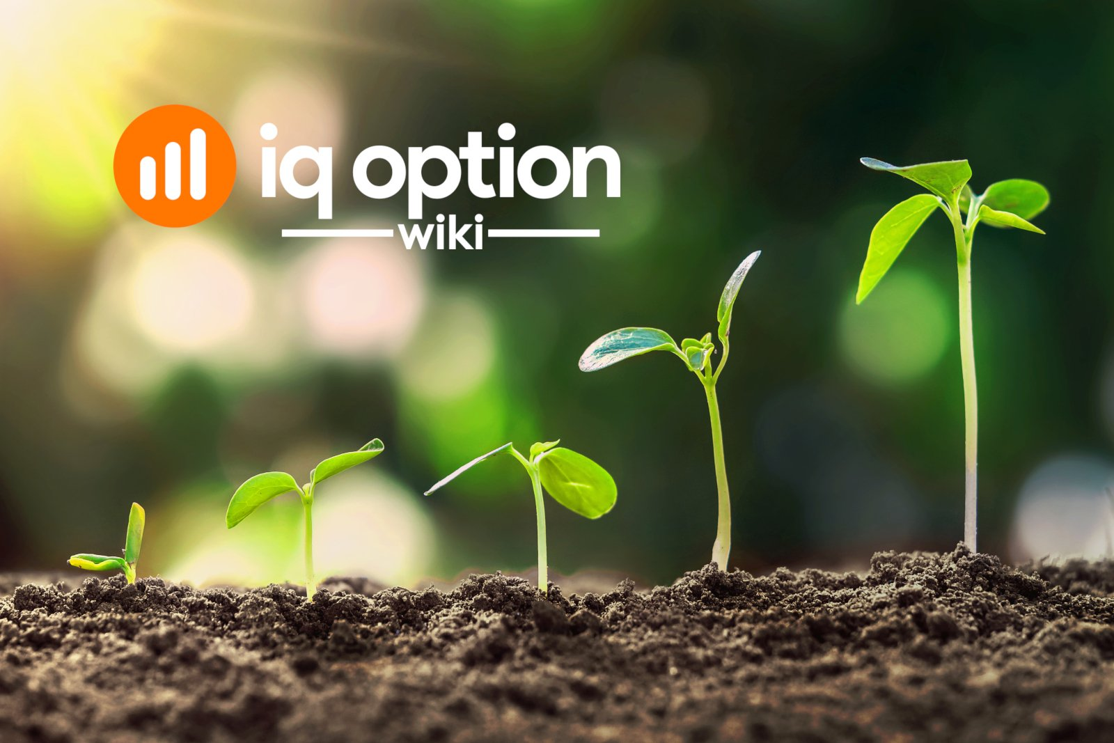 growing as a trader at iq option